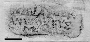 Figure 11. Rhodian rectangular stamp of Mnasôn of Antioch, metoikos [ASCSA/ABC].